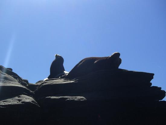 La Jolla Kayak : Seals at La Jolla