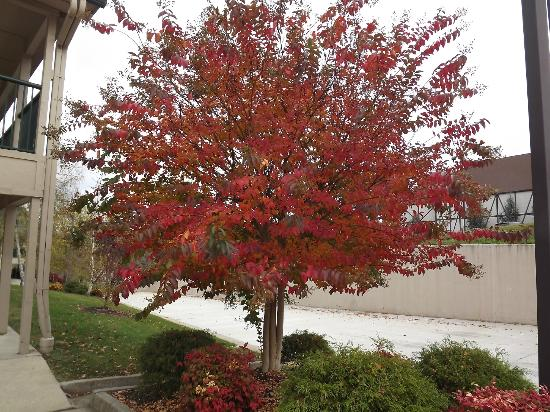 Days Inn by Wyndham Wytheville: Fall colors at Days Inn