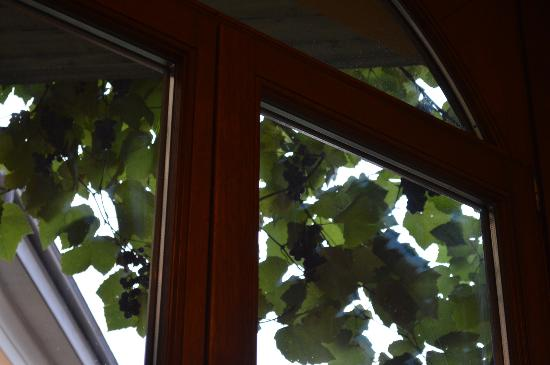Hotel Centrale: Grapes on the vine