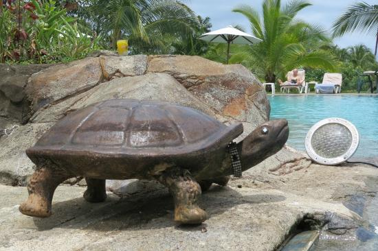 Popa Paradise Beach Resort : Turtles, turtles everywhere!
