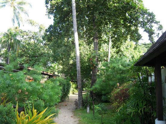 Chaweng Garden Beach Resort: Jungle