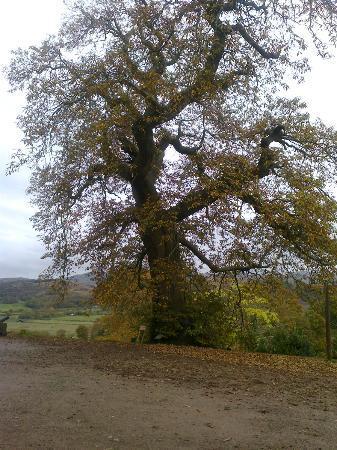 Muncaster's Coachman's Quarters: Tom Fools Tree (the local ghost)
