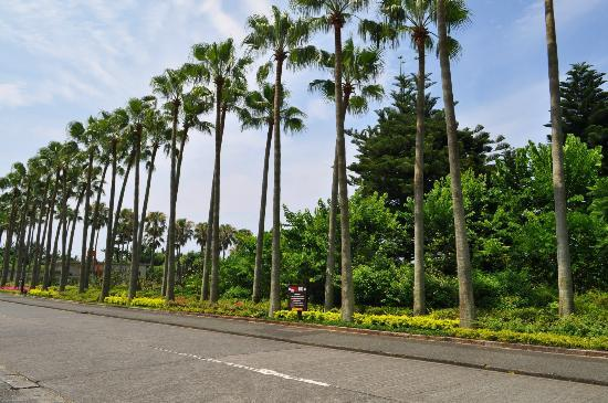 Nagasakibana Parking Garden : 長崎鼻パーキングガーデン