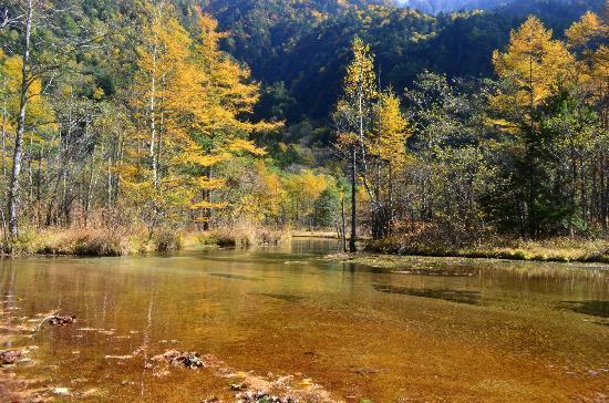 Pond Tashiro