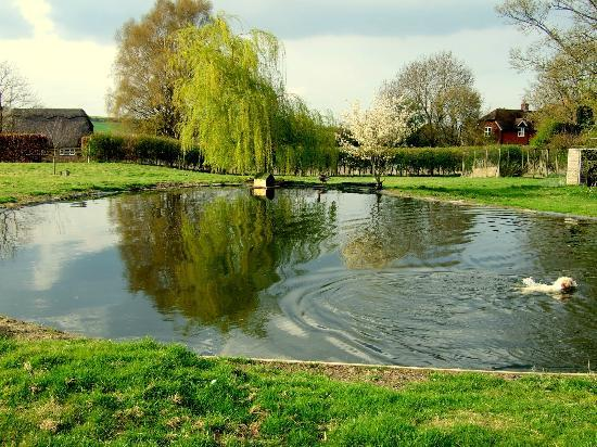 Shalbourne, UK: Our goose pond