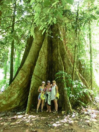 ภูเก็ต เซล ทัวร์: Big Tree over 1000years old
