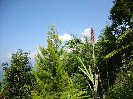 Neora Valley Jungle Camp: excellent scenery