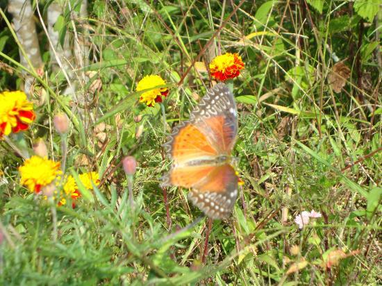 Neora Valley Jungle Camp: a colorful butterfly