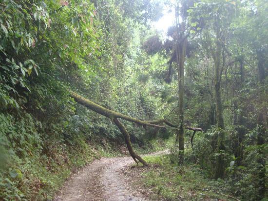 Neora Valley Jungle Camp: the dangerous road leding us to NVJC