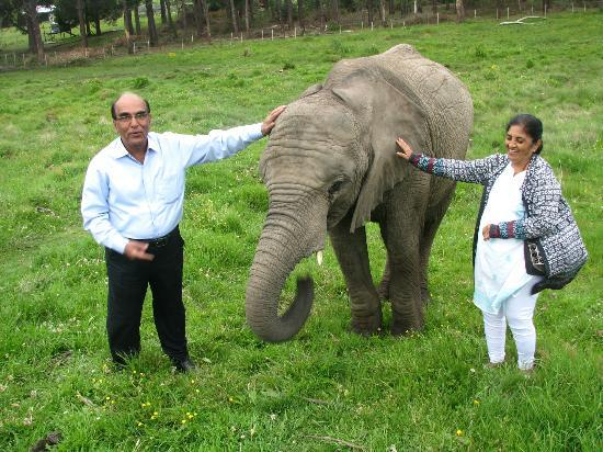 Knysna Elephant Park Lodge : My clients! Thrilled to the bone!