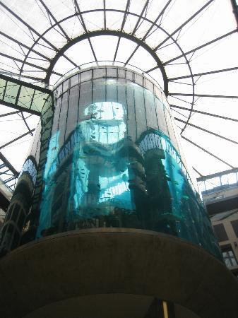 Aquarium: In the bar