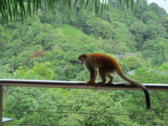 Tulemar Bungalows & Villas: Monkey on our balcony