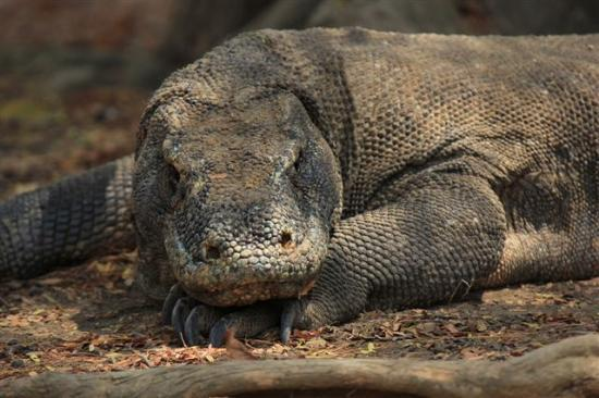 Komodo National Park, Indonesien: ...unser Titelfoto......