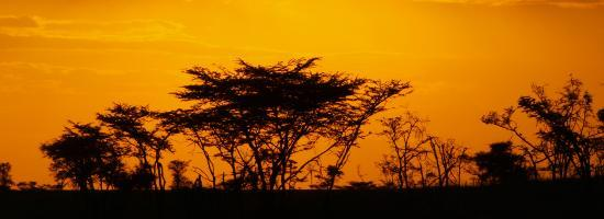 Porini Mara Camp: Sundowners with Sunset