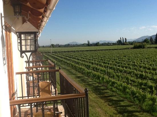 تيرا فينا: Vineyards, hills and blue sky seen from our balcony 