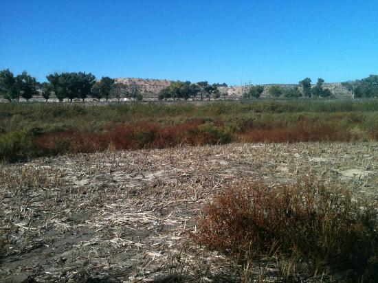 Mojave Narrows Regional Park Camping: Wet Lands Are Dry
