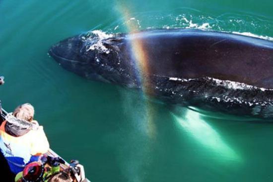 Gentle Giants Whale Watching: A beautiful humpback encounter. Photo: AA
