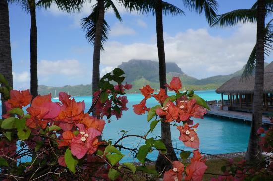 The St. Regis Bora Bora Resort: Lobby View