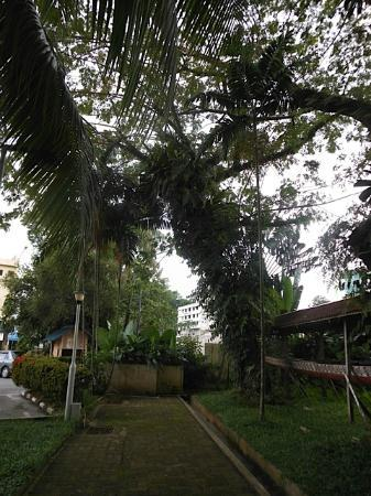 Telang Usan Hotel Kuching: A view of the little garden area