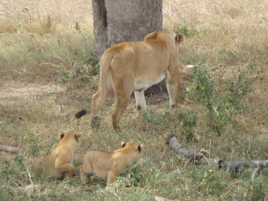 Serengeti Serena Safari Lodge: mother & kids