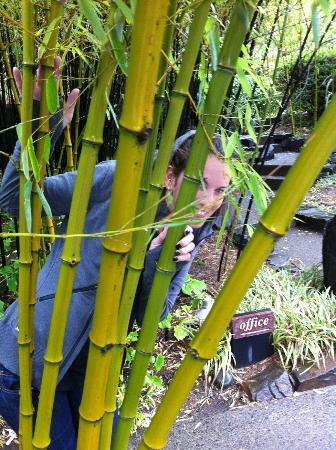 Coast Cabins: Bamboo Garden