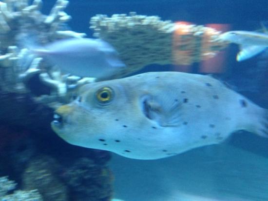 Funny Looking Fish at ...