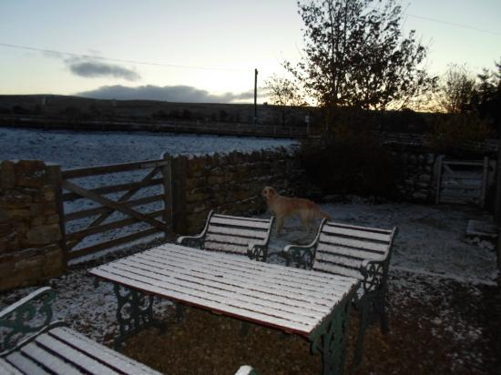 Elishaw Farm Holiday Cottages: Back garden