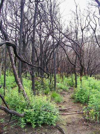 Marloth Nature Reserve: Devastated Forests