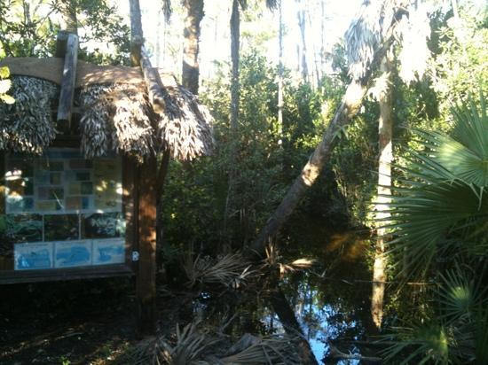 Apoxee Wilderness Trail: flooding