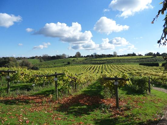 Three Choirs Vineyard : Views of Vineyard