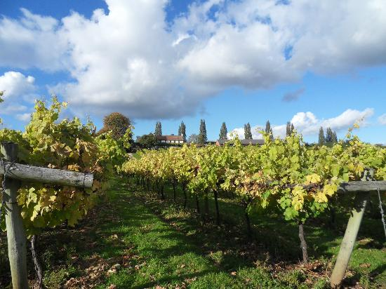 Three Choirs Vineyard : Lovely stroll through the vineyard