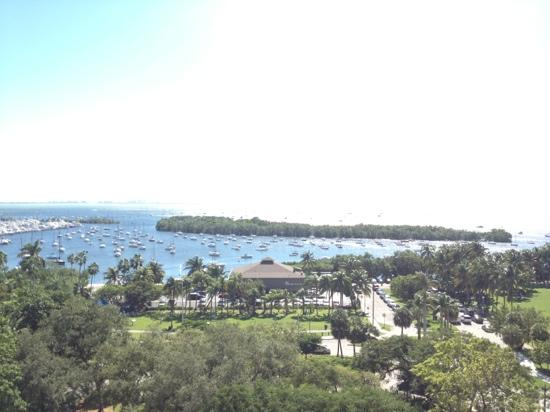 Sonesta Coconut Grove Miami: view from the pool! amazing!