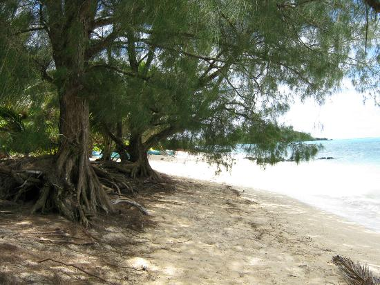 Captain James Retreat: Beach in front of house, sandy and shade