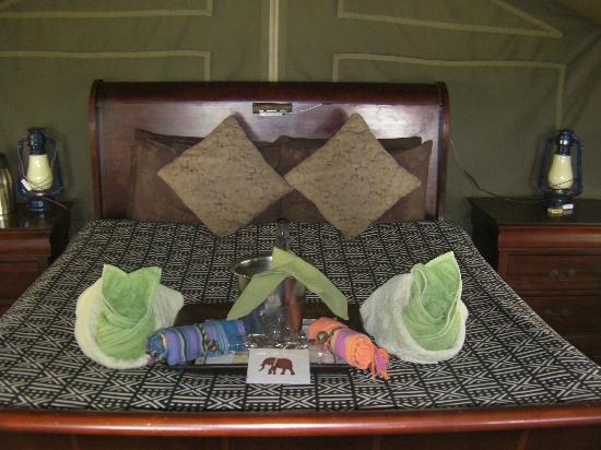 Meno a Kwena Tented Camp: A special welcome in our tent