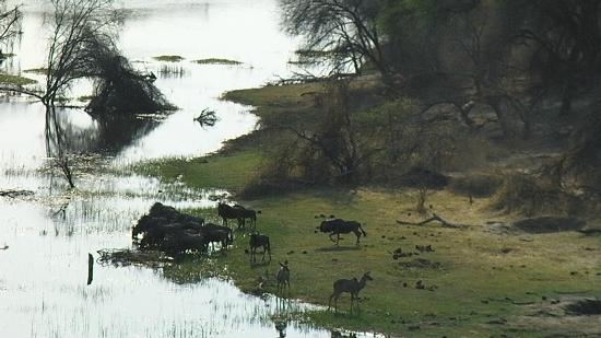 Meno a Kwena Tented Camp: A view from camp over the Boteti River