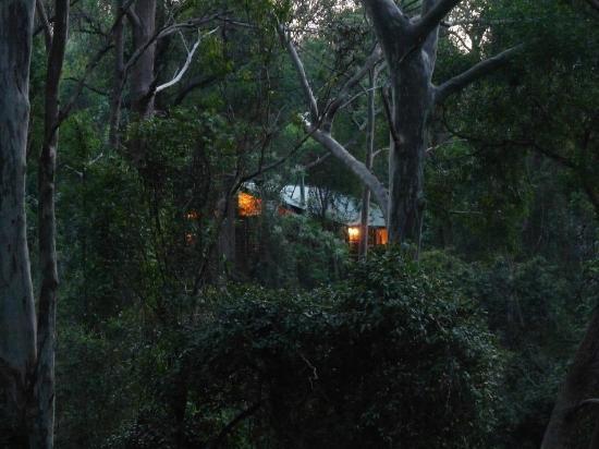 Ravensbourne Forest Chalets: chalet at dusk