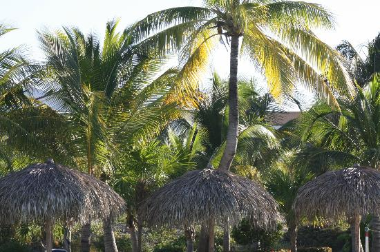 Sol Cayo Largo: grounds 
