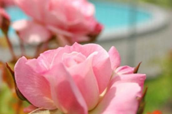 Econo Lodge Cleveland: Our roses thrive with a bit of tlc.