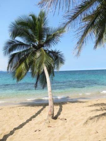 写真Physis Caribbean Bed & Breakfast枚
