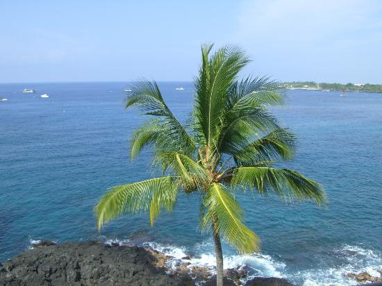 Royal Kona Resort: Lagoon Tower-Rm 678 view