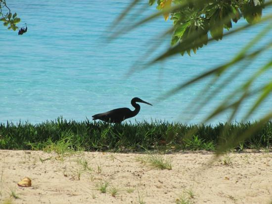 桑迪海灘渡假村照片