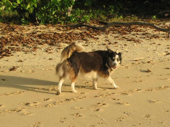 Sandy Beach Resort: Doggie