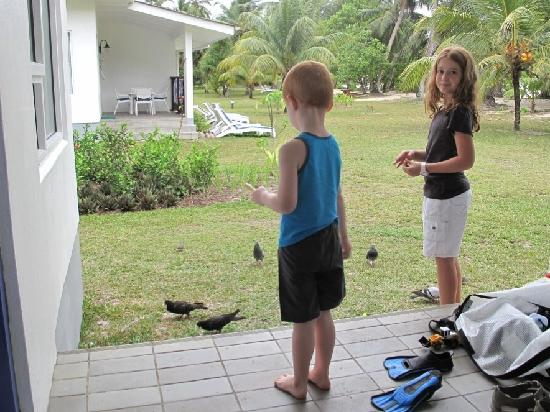 Chalets d'Anse Forbans : Feeding the birds outside the chalet door