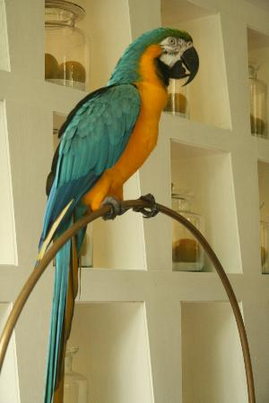 Anantara Hua Hin Resort: Alex - the resort mascot