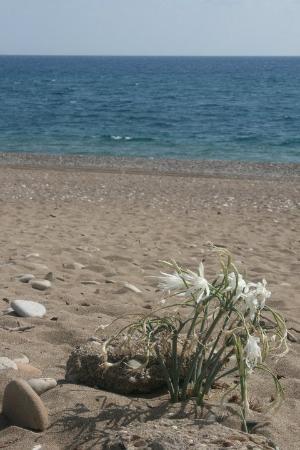 Almira Butik Hotel: Beach