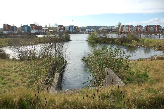 River Taff の河口付近の緩衝池