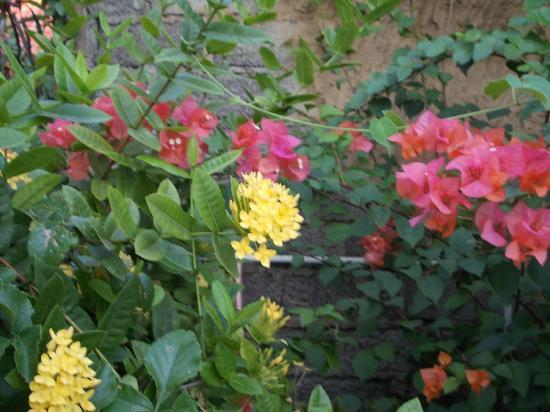 Three Brothers Villas Amed (Bobby's Villas): flowers