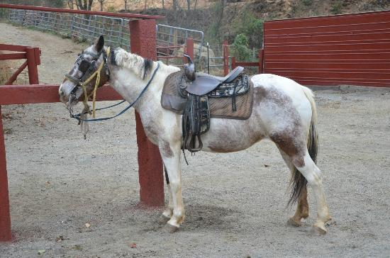 Nosey - Picture of Sandy Bottom Trail Rides, Marshall - TripAdvisor