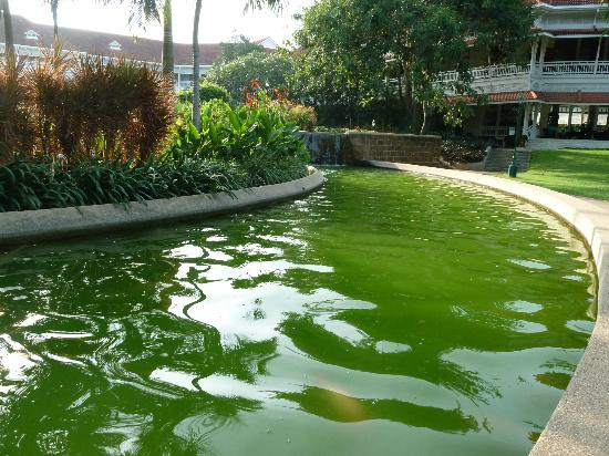 Centara Grand Beach Resort & Villas Hua Hin: carp pond
