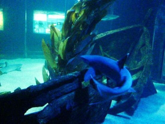 Picture of Underwater World Langkawi, Langkawi - TripAdvisor